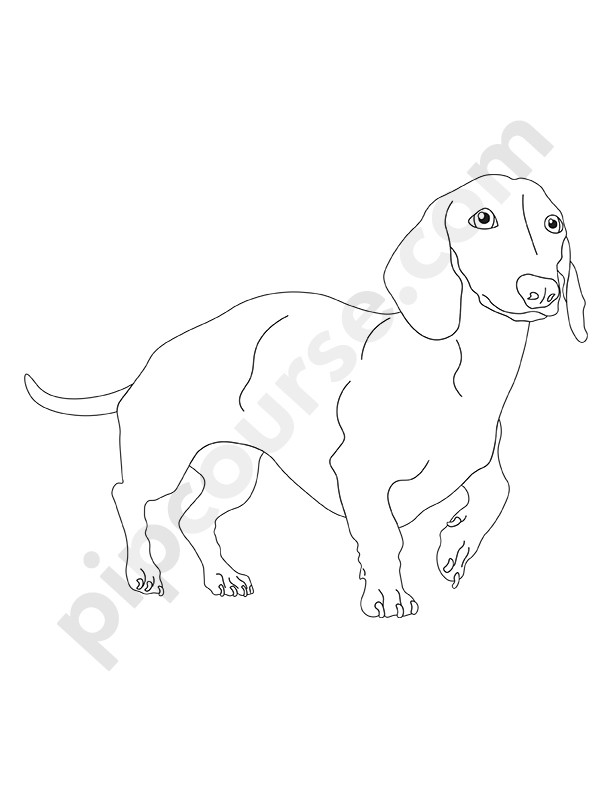 Coloring Book With Dogs for Kids